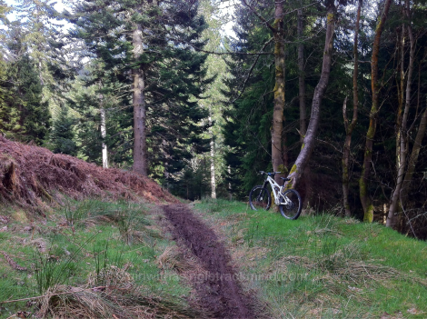 Muddy trail at Glentress