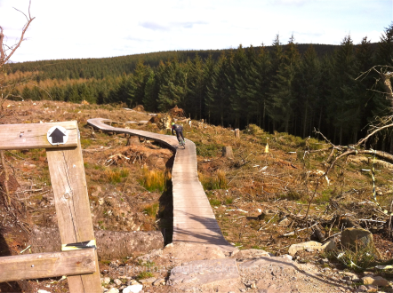 Llandegla boardwalk