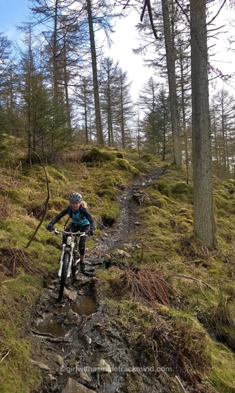Grizedale natural trails
