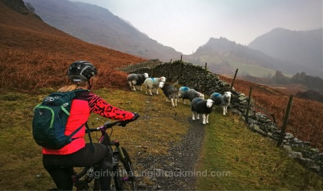 Making friends on the Borrowdale Bash